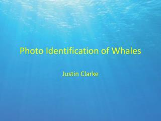 Photo Identification of Whales