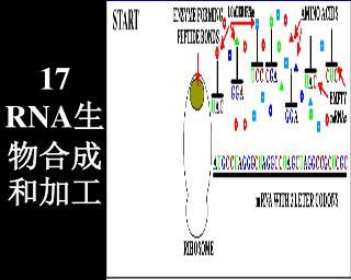 17 RNA 生物合成和加工