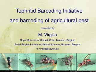 presented by  M. Virgilio Royal Museum for Central Africa, Tervuren, Belgium Royal Belgian Institute of Natural Sciences