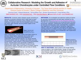 Collaborative Research: Modeling the Growth and Adhesion of Auricular Chondrocytes under Controlled Flow Conditions