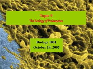 Topic 9 The Ecology of Prokaryotes