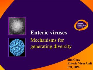 Enteric viruses