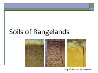 Soils of  Rangelands