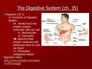 Digestion (35.1)  I. Functions of Digestive System A.  Breaks food into smaller, simpler molecules cells can use! 1. Mec