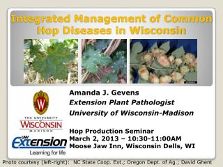Integrated Management of Common Hop Diseases in Wisconsin