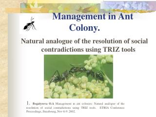 Management in Ant Colony.