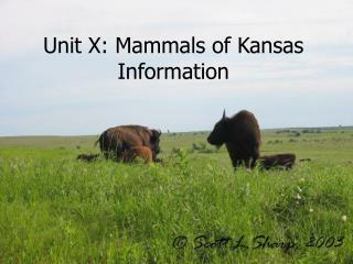 Unit X: Mammals of Kansas Information