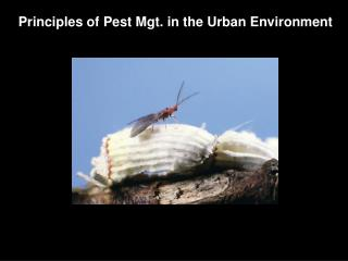 Principles of Pest Mgt. in the Urban Environment