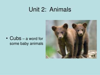 Unit 2:  Animals
