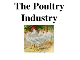 The Poultry Industry