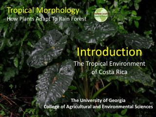 Tropical Morphology How Plants Adapt To Rain Forest