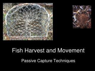 Fish Harvest and Movement
