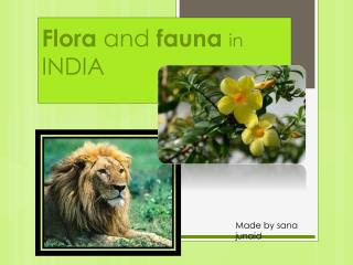 Flora  and  fauna in  INDIA