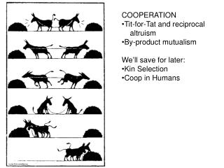 COOPERATION Tit-for-Tat and reciprocal      altruism By-product mutualism We ' ll save for later:  Kin Selection Coop