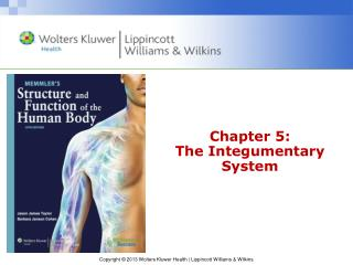 Chapter 5: The Integumentary System