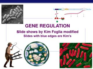 GENE REGULATION s lide shows by Kim Foglia modified Slides with blue edges are Kim's