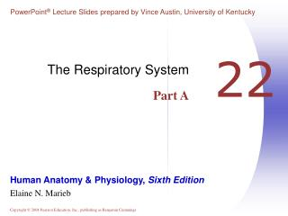 The Respiratory System Part A
