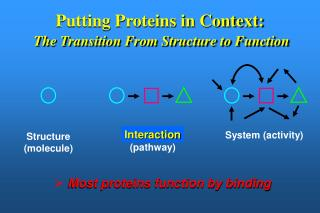 Putting Proteins in Context:  The Transition From Structure to Function