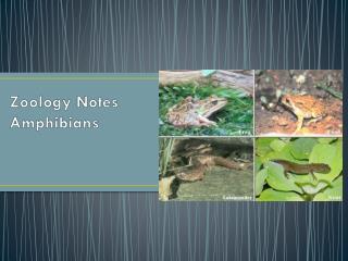 Zoology Notes Amphibians