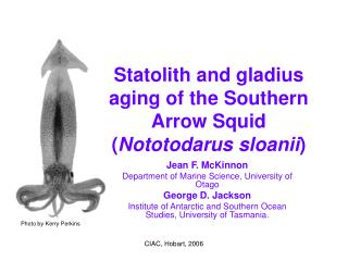 Statolith and gladius aging of the Southern Arrow Squid ( Nototodarus sloanii )