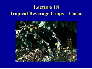 Lecture 18 Tropical Beverage Crops Cacao