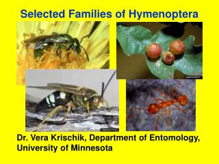 Selected Families of Hymenoptera