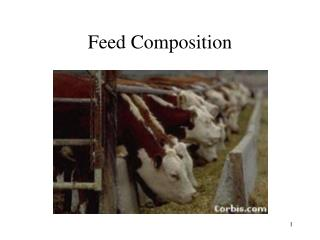 Feed Composition