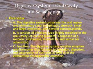 Digestive System I: Oral Cavity and Salivary glands