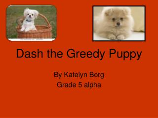 Dash the Greedy Puppy