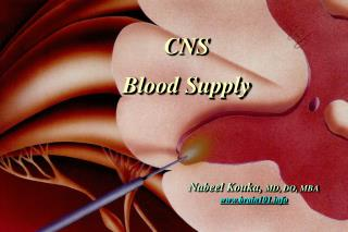 CNS Blood Supply