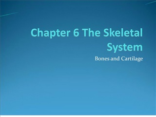 Chapter 6 The Skeletal System
