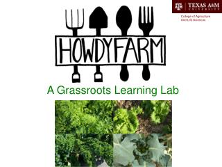 A Grassroots Learning Lab