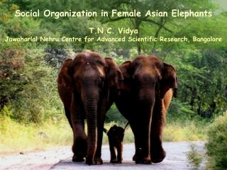 Social Organization in Female Asian Elephants T.N.C. Vidya  Jawaharlal Nehru Centre for Advanced Scientific Research, B