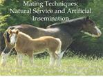 Mating Techniques: Natural Service and Artificial Insemination