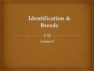Identification &  Breeds