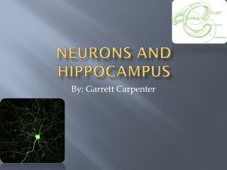 Neurons And Hippocampus