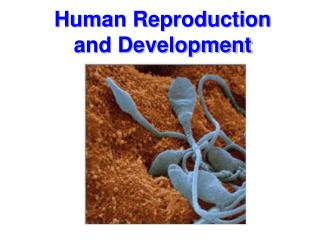 Human Reproduction and Development