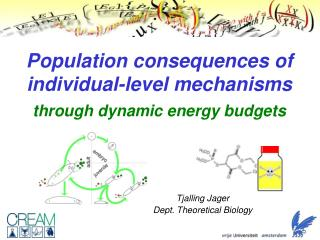 Population consequences of individual-level mechanisms through dynamic energy budgets