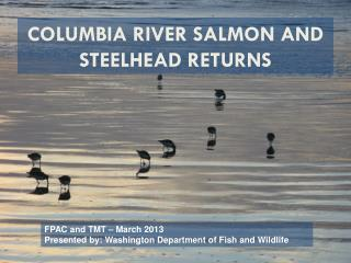 Columbia River Salmon and Steelhead Returns