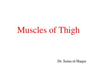 Muscles of Thigh