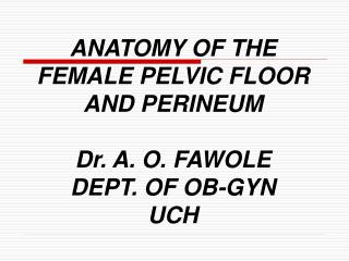 ANATOMY OF THE FEMALE PELVIC FLOOR AND PERINEUM Dr. A. O. FAWOLE DEPT. OF OB-GYN UCH