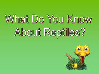What Do You Know  About Reptiles?