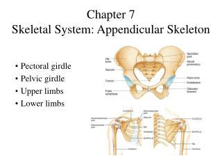 Chapter 7 Skeletal System: Appendicular Skeleton