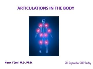 ARTICULATIONS IN THE BODY