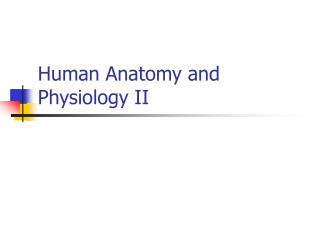 Human Anatomy and Physiology II