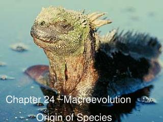 Chapter 24 ~Macroevolution            Origin of Species