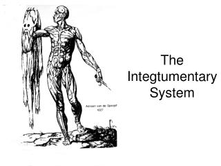 The Integtumentary System