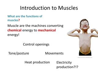Muscle are the machines converting  chemical energy to  mechanical energy!