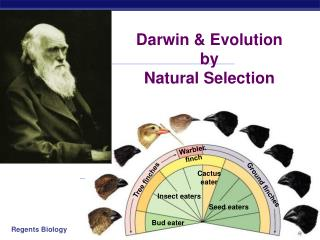 Darwin & Evolution by  Natural Selection