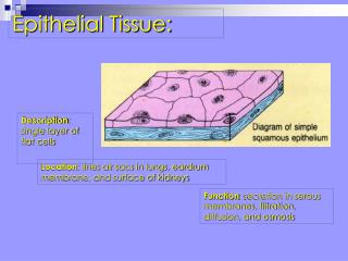 Description : single layer of flat cells